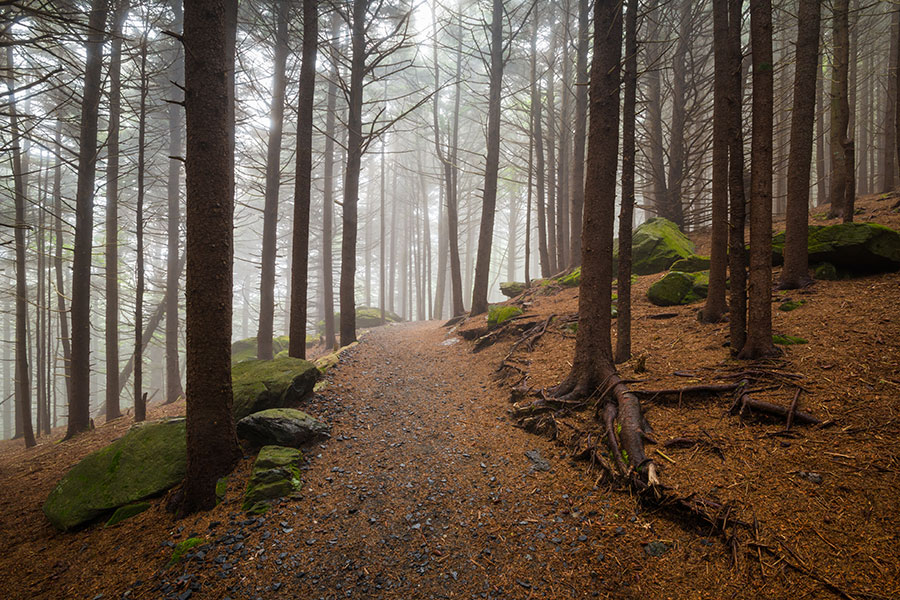 Blog - Foggy Path in Forest with Tall Trees